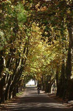 Fotos de Carmelo: Fotos y paisajes de la ciudad de Carmelo
