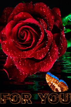 Animation Elegant dissolve the Rose (For You), by Diza, SIFCO Luxury dissolve the Rose (For You), by Diza
