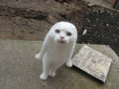 WTF... Seal Cat?