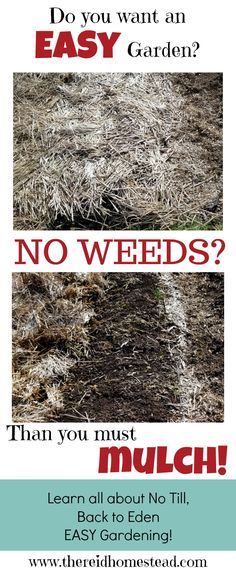 The Secret to Easy Gardening, Use Mulch for No Weeding Want to learn how to garden with no weeds? Learn the secret of mulch and all the benefits it has in the garden. No Weeding! The Reid Homestead Garden Soil, Lawn And Garden, Garden Plants, Garden Landscaping, Landscaping Ideas, Gravel Garden, Flowering Plants, Herb Garden, Gardening For Beginners