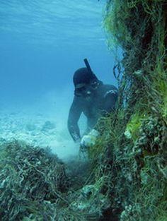 NOAA Habitat Conservation | Removing Marine Debris from Hawaii's Coral Reefs | My Ocean Update #marinedebris