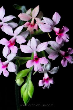 Discover easy to grow orchids that flourish in a typical home environment.These easy, indoor orchids don't require a greenhouse. Indoor Orchids, Orchid Plants, Air Plants, Feng Shui Plants, Orchid Seeds, Office Plants, Grow Your Own Food, Flourish, House Plants
