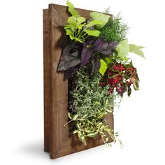 Compliment your home with the Grovert Living Wall Planter! This ghostwood frame kit wall garden will make you feel like its spring all year round.