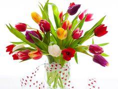 Os bulbos da planta seguiram para o ocidente por volta de 1560, após o botânico Conrad Von Gesner cataloga flor.