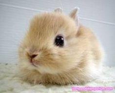 Billedresultat for søde dyr