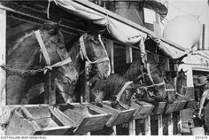1915 - at sea - [C01624 | Australian War Memorial]