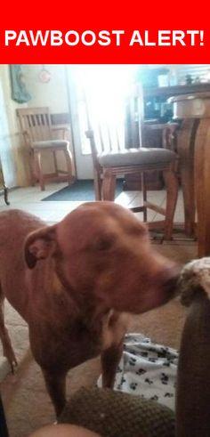 Please spread the word! Sadie was last seen in New Port Richey, FL 34653.    Nearest Address: Near Parkside Dr & Cypress Knoll