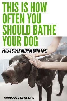 how often to bathe a dog