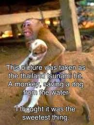 Monkey - amazing facts and nature - Google Search