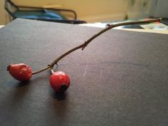 Rosehips from the hedgerow on New Years day 2013
