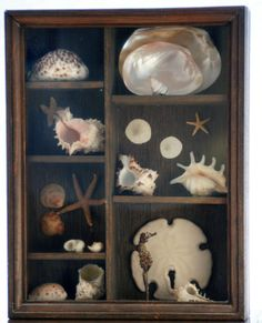 Craft Classics: Shadow Box --I want to do this with all our amazing shells!