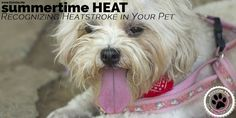Good weather means more outdoor activities. Remember, our pets can be severely affected by the sun, humidity and higher temperatures.