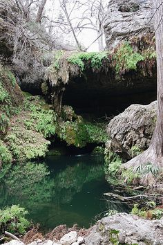 Westcave Preserve in Austin, TX