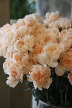 Pale Peach Lizzy Carnation (touch of blush)