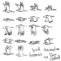 flycycle frames (Free 4 all, read description) by drosera-sundews on DeviantArt, – Animation ideas Animation Reference, Art Reference Poses, Drawing Reference, Animal Sketches, Animal Drawings, Art Sketches, Drawing Animals, Drawing Techniques, Drawing Tips
