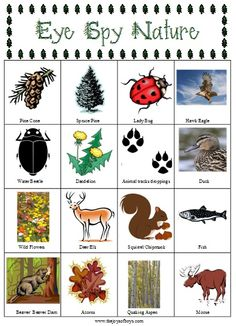 Eye Spy Nature  Fun scavenger hunt game for the kids