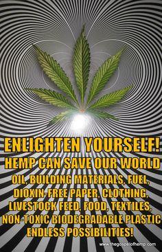 Enlighten Yourself Biodegradable Plastic, Biodegradable Products, Hemp Recipe, Treating Fibromyalgia, World Oil, Marijuana Facts, Medical Cannabis, Great Love, Free Paper