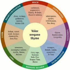 Essential wheel of oils.