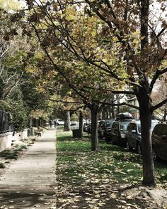 I dream of waking up to the crisp morning air and walking on crunchy leaves in a quiet neighborhood in Colorado.