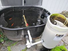 1000 images about koi fish stock tank on pinterest for Pool filter for koi pond