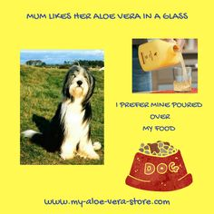 My Sam and I both thrive on our daily dose of Aloe Vera Gel! Find it and all products for humans and animals here: www.my-aloe-vera-store.com