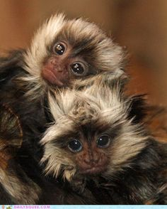 cute animals - Squee Spree: Do You Like Our Hair?