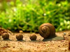 Minuscule ep25 Sans coquille (escargots en vedette)
