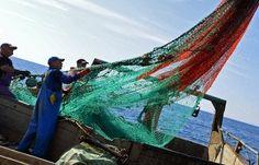 #срочно #ТАСС | Власти решили разобраться в причинах дороговизны и большой доли импорта на рынке рыбы | http://puggep.com/2015/10/20/vlasti-reshili-razobratsia-v-p/