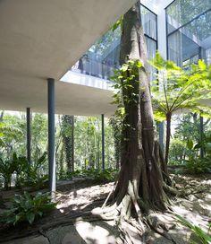 Tree House | 1951 | Morumbi, Sao Paulo, Brazil | Lina Bo Bardi