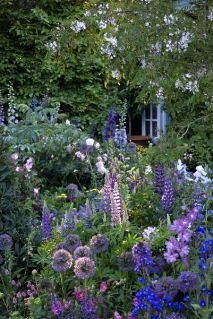 Countryside garden, backyard, purple color scheme