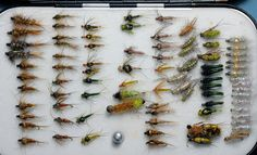 Fly box full of generic nymphs
