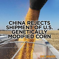 China Rejects Shipment of U.S. GM Corn. More Here: http://www.latimes.com/business/money/la-fi-mo-china-gmo-corn-shipment-rejected-20131202,0,3620490.story#ixzz2mRx1Weez