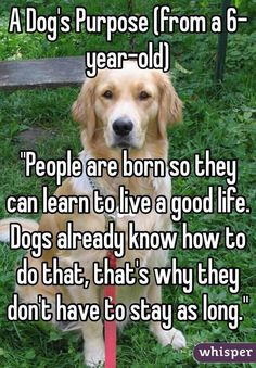 """A Dog's Purpose (from a 6-year-old)] """"People are born so they can learn to live a good life. Dogs already know how to do that, that's why they don't have to stay as long."""""""