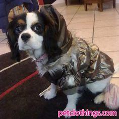 Dog Bomber Jacket in Gold
