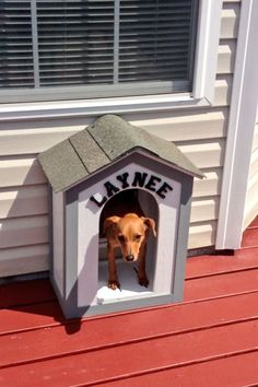 Dog Door Entrance to House