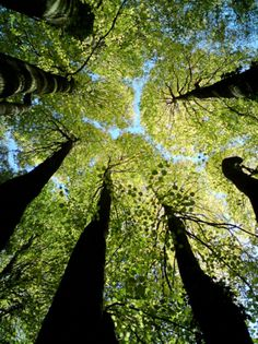 this is a shot I would take....laying on the ground looking up at the awesomeness of the trees.