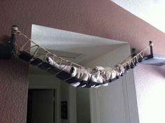 The Indiana Jones Cat Bridge.