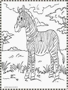 gambar mewarnai zebra