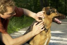 How to Remove Ticks from Dogs (and Keep Them From Coming Back)