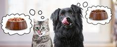 Diet Tips for Diabetic Pets.   #pets #dogs #cat #bird #horse