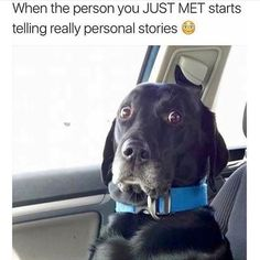 17 Funny Dog Pictures That Will Make You Laugh - Funny Dog Quotes - affordable custom pet memorials for everyone. The post 17 Funny Dog Pictures That Will Make You Laugh appeared first on Gag Dad. Humor Animal, Funny Animal Memes, Animal Quotes, Dog Memes, Cute Funny Animals, Funny Animal Pictures, Funny Cute, Funny Dogs, Funny Memes