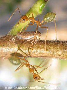 Kakadu National Park Kakadu National Park, National Parks, Ladybugs, Ants, Places To Go, Australia, Photos, Top, Animals
