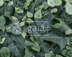 Behance Net, Plant Leaves, Vegetables, Gaia, Design, Plants, Vegetable Recipes, Plant