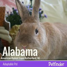 It's Adopt a Rescued Rabbit Month! Check out tips on introducing rabbits to other pets.