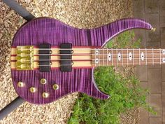 SPECTOR® Owners Club   Page 2837   TalkBass.com