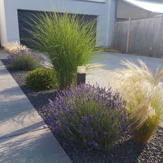 gartengestaltung ideen lavender garden The day can start so beautifully. Back Gardens, Outdoor Gardens, Small Front Gardens, Indoor Garden, Fall Planters, Front Yard Landscaping, Landscaping With Grasses, Modern Landscaping, Landscaping Design