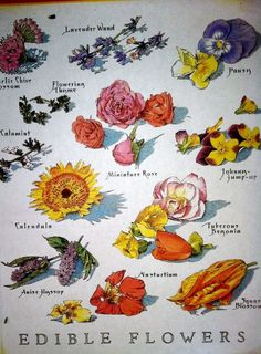 Edible flower guide from Cook's magazine