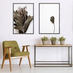 Shop this print set and many others online. Delivered to your door, local and international 🌎 All prints are proudly Sonny Mo Arts originals. Art Prints For Home, Botanical Wall Art, Nature Prints, Fine Art Photography, Nature Photography, Contemporary Decor, Photographic Prints, Wall Art Prints, Floral Prints