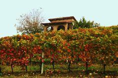 autunno .....