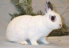 Entendiendo el lenguaje del conejo: gestos y actitudes…